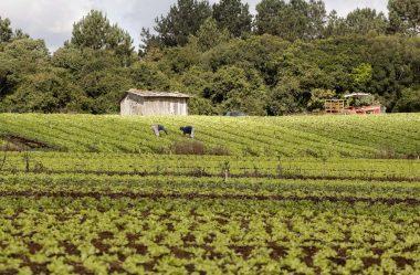 EMENDAS DESTINAM R$ 154 MILHÕES À AGRICULTURA FAMILIAR